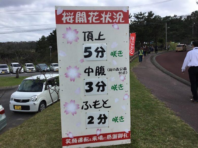 八重岳さくら祭りは山頂で5分咲きです。