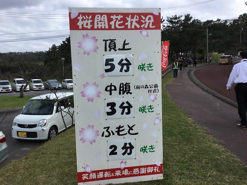 沖縄のサクラは頂上から咲いていく