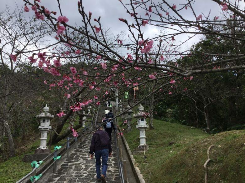 名護城公園の桜です。