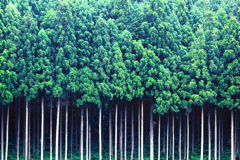 花粉症の季節到来!沖縄には花粉症がない.杉檜がないから