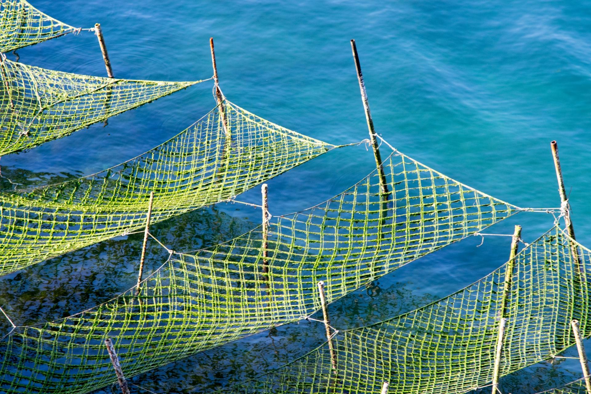 沖縄の早春の風物詩「アーサ」はどこで採れる?簡単レシピも紹介!