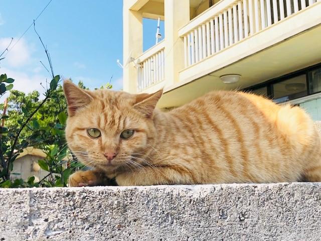 神の島「久高島」をレンタサイクルで見つけた久高島の猫