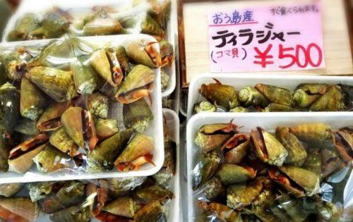 ティラジャー(コマ貝)を沖縄で潮干狩り!酒の肴にピッタリ!