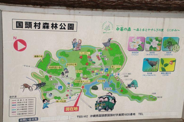 やんばる国立公園内を歩くエコツアー