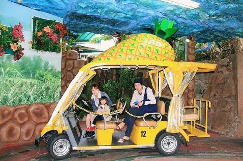 「ナゴパイナップルパーク」はパイナップル号に乗って楽々見学!