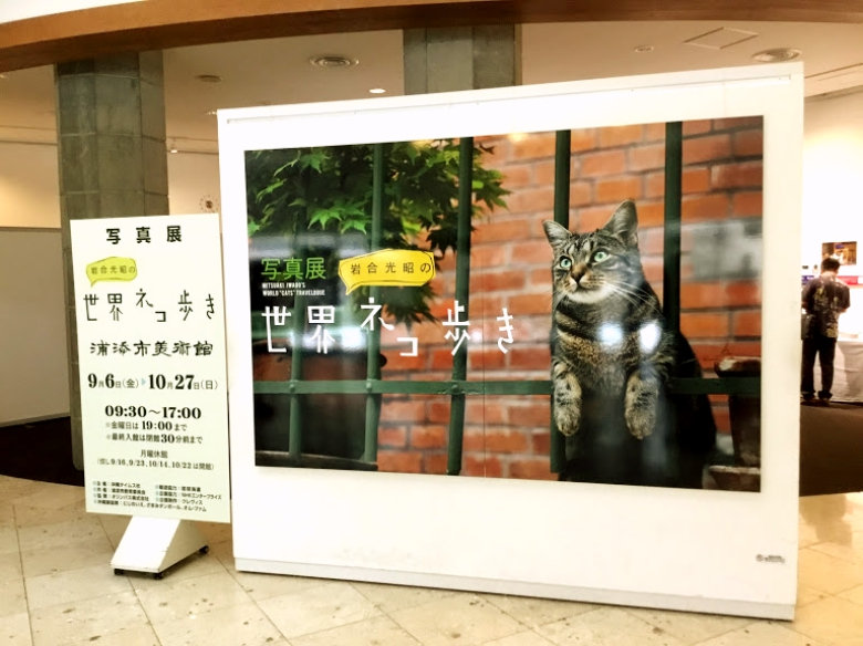 浦添市美術館でネコの写真展「岩合光昭の世界ネコ歩き」