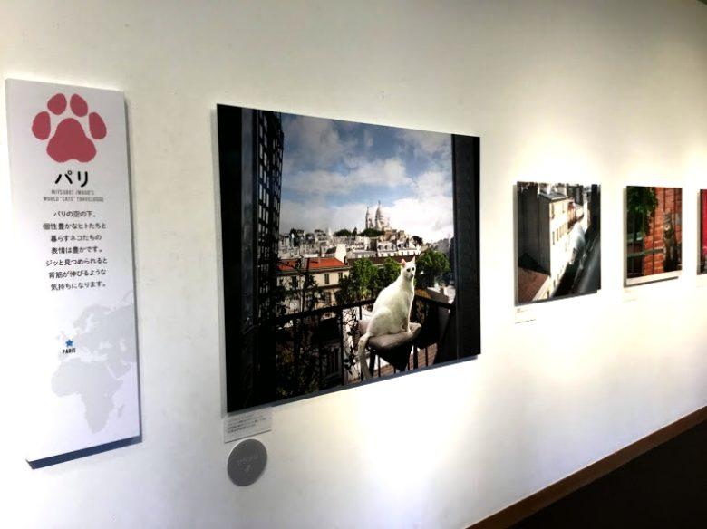 パリの猫歩き岩合光昭写真展