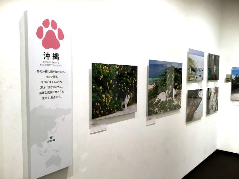 沖縄の猫歩き