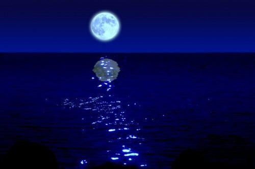 ホテル日航アリビラ「夜の潮干狩り」は冬の沖縄の風物詩!