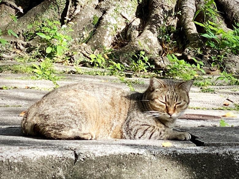 猫好きにはたまらない那覇の希望ヶ丘公園