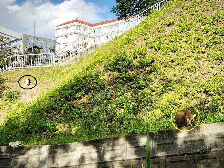 那覇市内の猫が多い希望ヶ丘公園