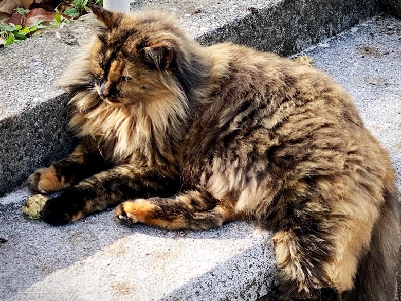 こんな猫もいる希望が丘公園