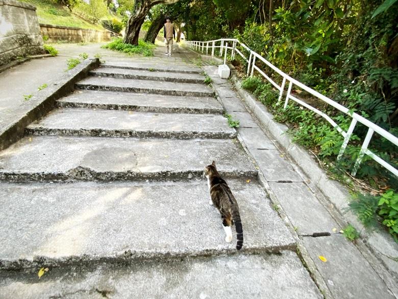 ホッコリするほど猫が多い希望ヶ丘公園