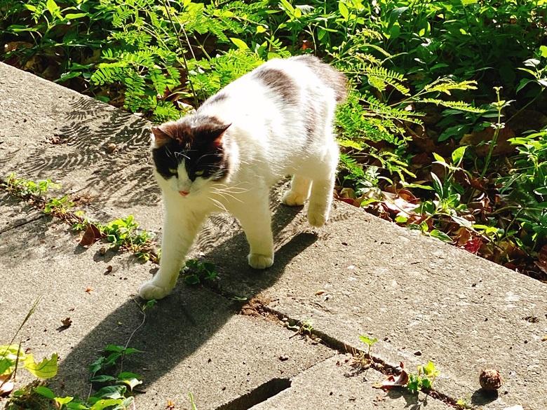 猫がある那覇希望ヶ丘公園