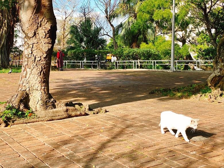猫が多く歩きます那覇の希望ヶ丘公園