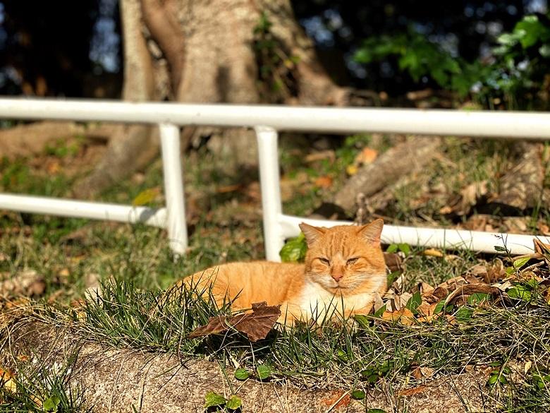 猫好きにはたまらない那覇のにゃんこスポット「希望ヶ丘公園」