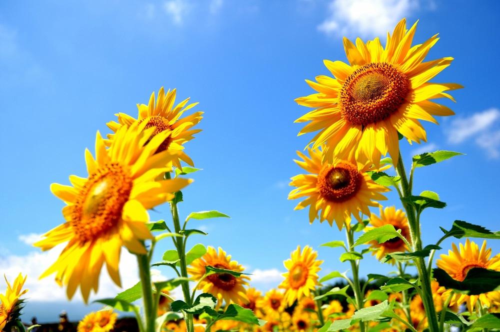 春の沖縄は花盛り!1月~3月の花まつりイベント6選