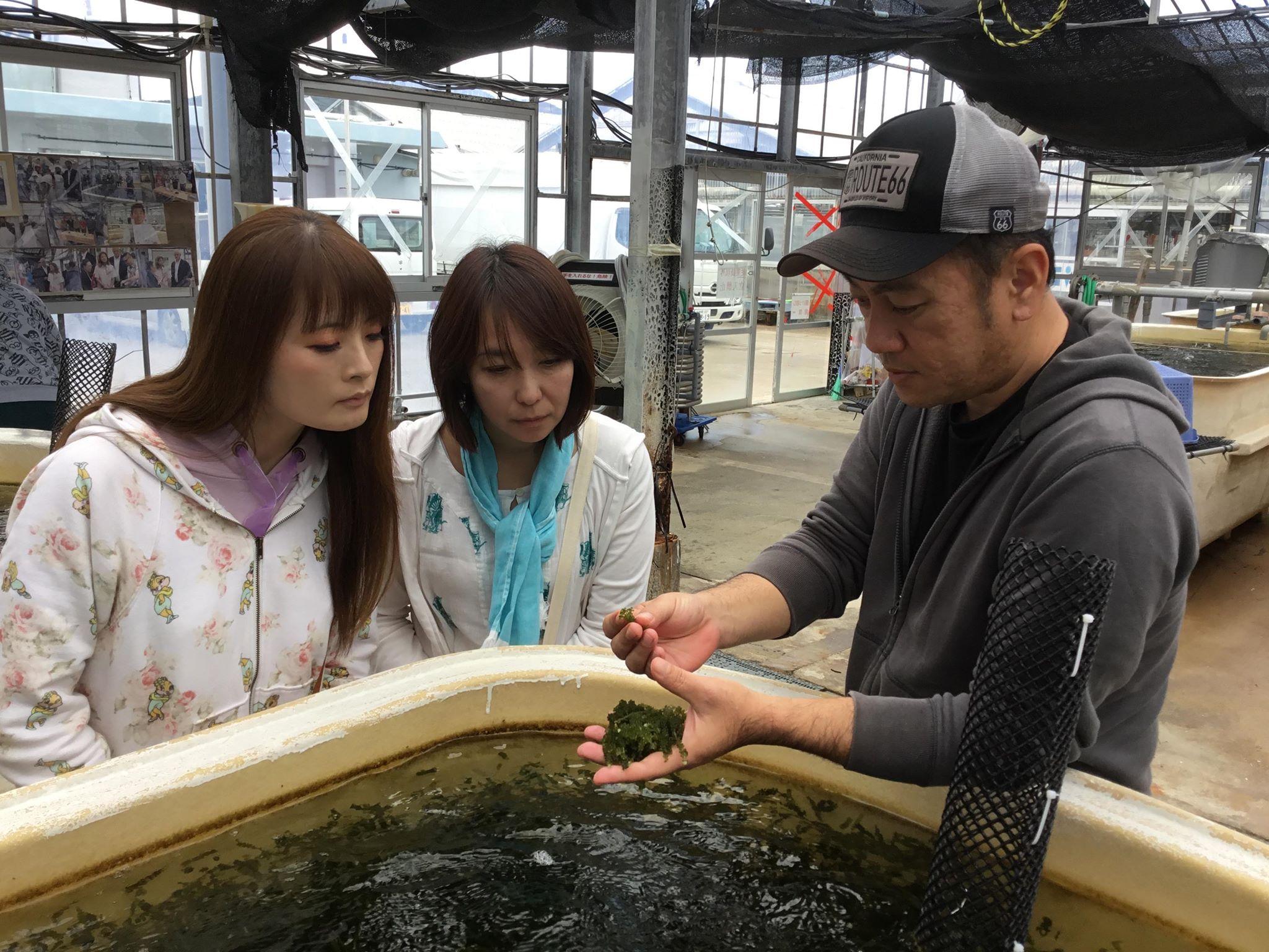 久米島のプチプチ海ぶどう養殖場見学と摘み取り体験