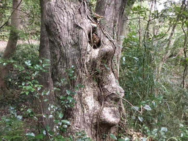 久米島の自然、ニブチの森散策