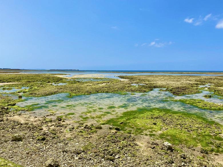石垣島の潮干狩り