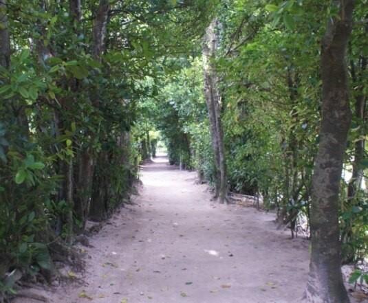 フクギテラスはフクギ並木の中にあります。