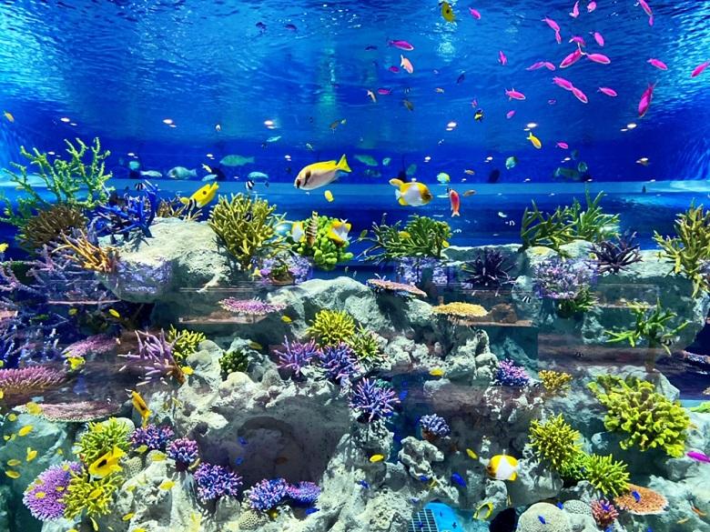 DMMかりゆし水族館のすいそう