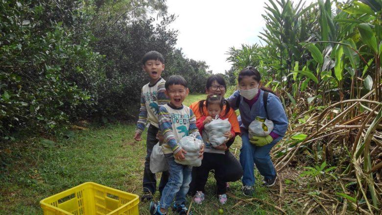 勝山シークヮーサーの収穫体験