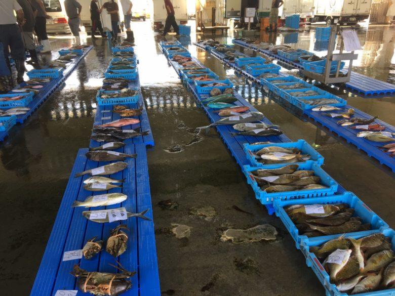 名護漁協のセリ