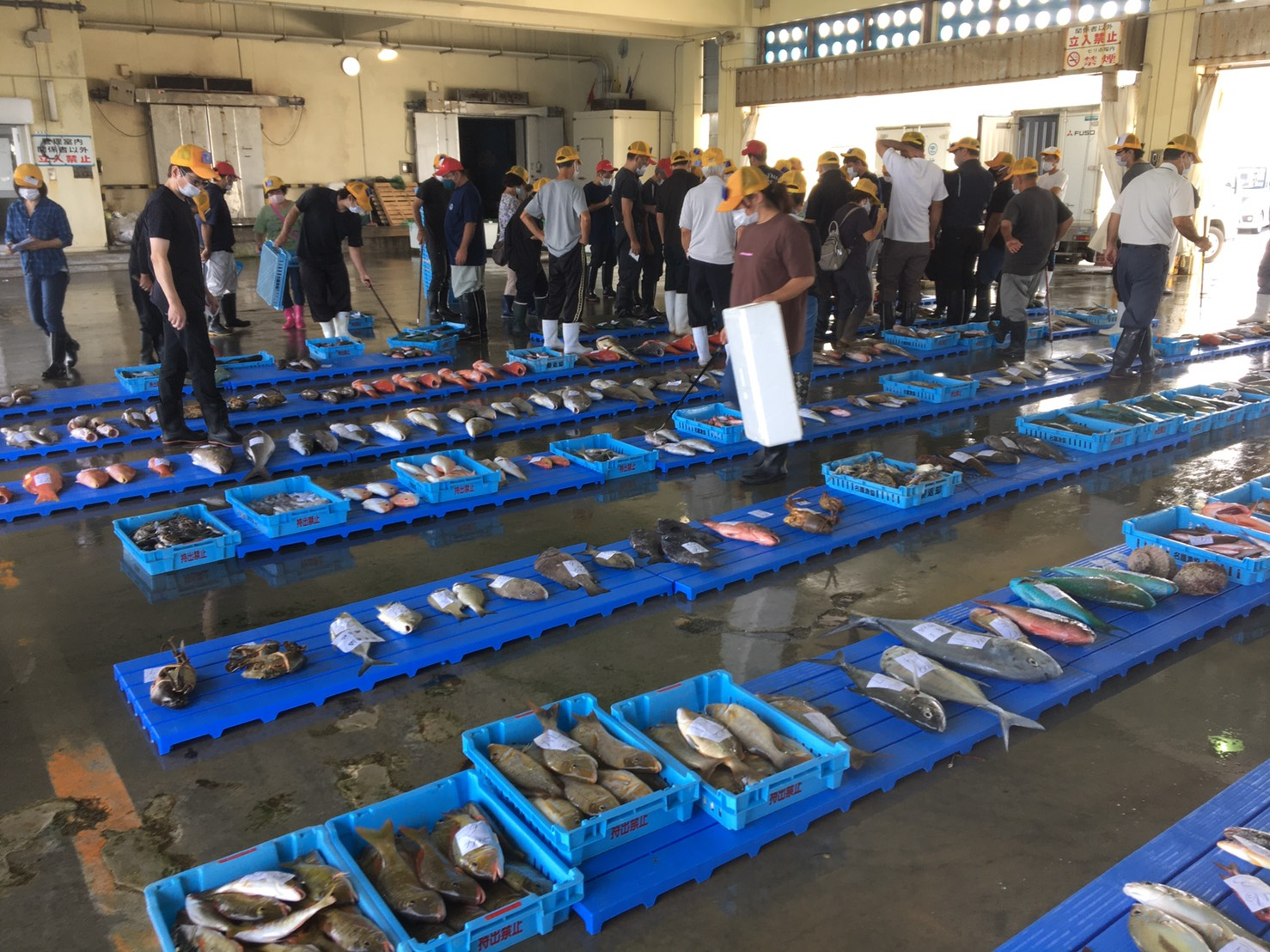 名護漁港でセリを見学!沖縄ならではの新鮮な魚介!!