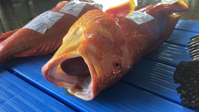 名護漁港でセリに出されたミーバイ