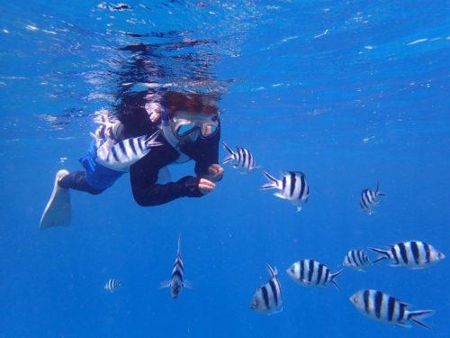 冬でも海に入りたい!を叶える「プチ・シュノーケリングツアー」