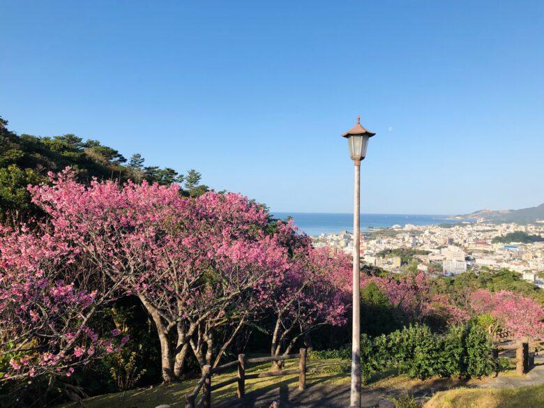 名護城公園の桜