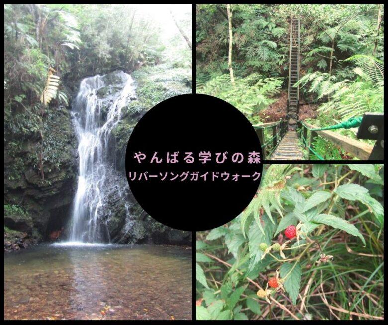 やんばる学びの森をトレッキング!世界遺産候補地をガイドと歩く!