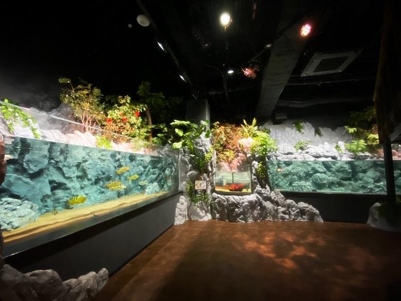 新らしい水族館DMMかりゆし水族館の水槽