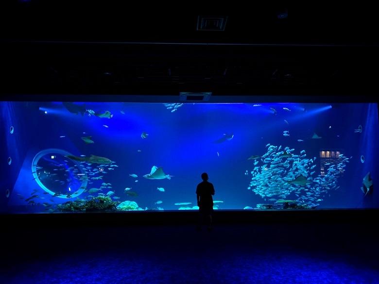 新らしい水族館DMMかりゆし水族館