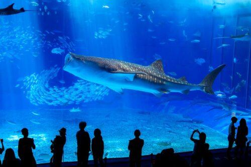 美ら海水族館から近いホテル8選!近場おすすめ観光スポットも
